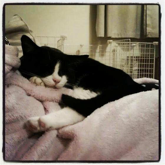 Bertie the cat