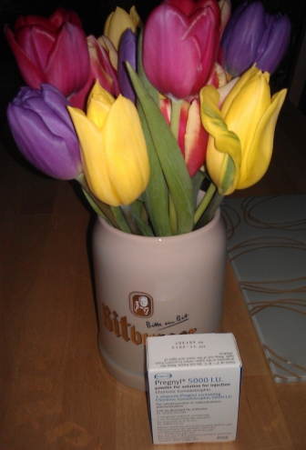 May's tulips with my Pregnyl
