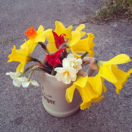 Daffodils, narcissi and red tulips in a Bitburger tankard