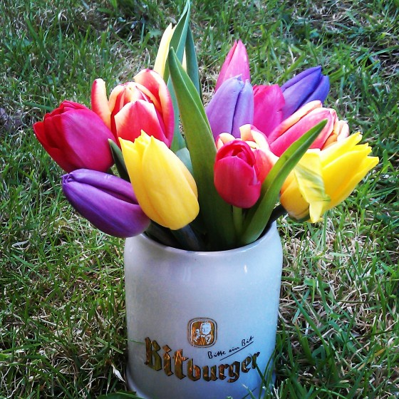 Pink, purple and yellow tulips in a Bitburger tankard, sat on the grass